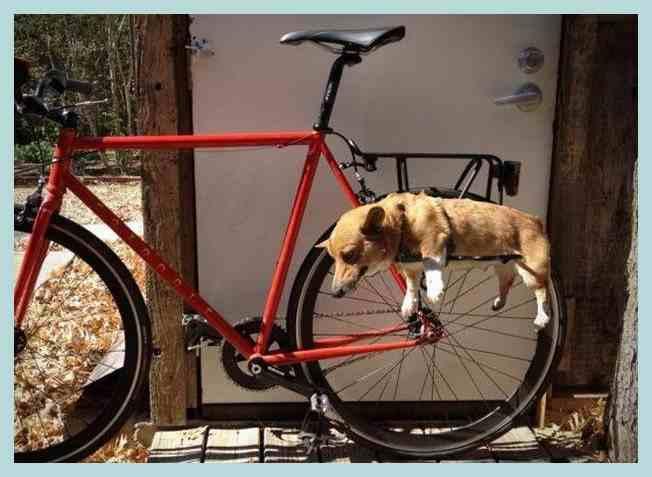 Как выбрать хороший детский велосипед