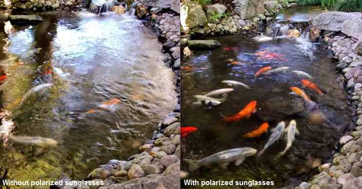 Поляризация солнцезащитных очков и рыбалка